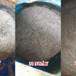 cách ủ cá thành phân bón hữu cơ