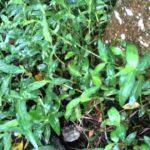 tác dụng của việc nuôi giữ cỏ