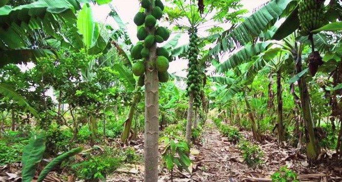 ưu điểm nông nghiệp sinh thái là tạo ra nguồn thực phẩm tốt cho sức khỏe hơn