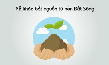Rễ khỏe bắt nguồn từ nền đất sống