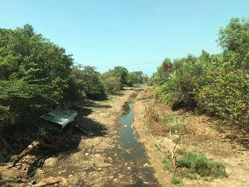 cải tạo đất nhiễm mặn