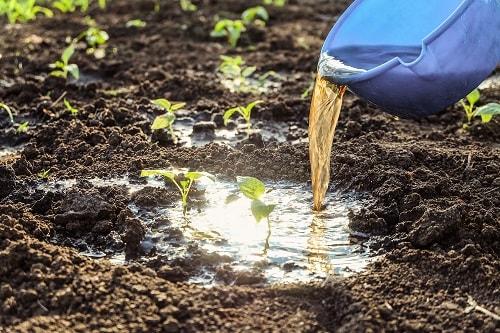 việc giữ cho lượng nước trong đất được ổn định cũng là yếu tố quan trọng giúp sinh vật đất phát triển.