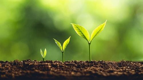 Đất khỏe là đất có sự sống trong đó