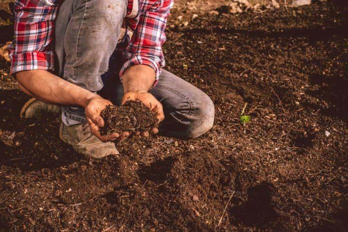 Đát giữ được ẩm hơn và tạo điều kiện tốt hơn cho cây sinh trưởng