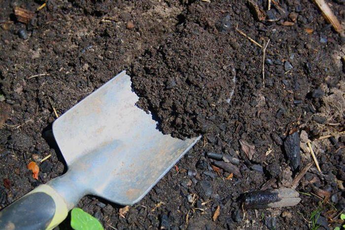 Đất lý tưởng là đất được bổ sung nhiều hữu cơ