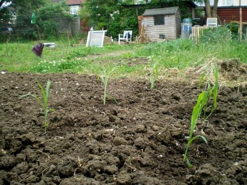 Đất đóng váng, nén dẽ, pH thấp, vsv hại gia tăng là dấu hiệu suy thoái đất