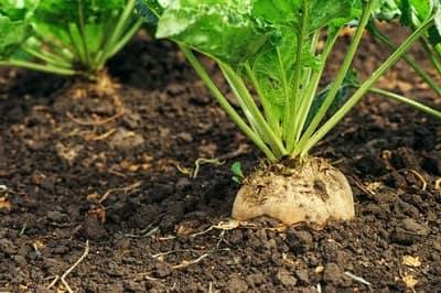 Vai trò của vi sinh vật: cải thiện cấu trúc đất