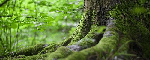 Nông nghiệp và rừng tự nhiên khác nhau về lượng sản xuất sinh khối