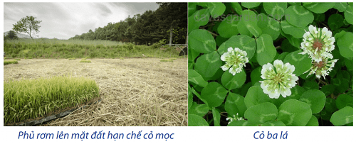 nông nghiệp vô vi vô tác để cỏ mọc tự nhiên