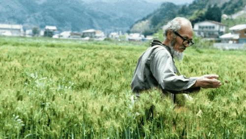 nông nghiệp vô vi vô tác cần sự nhẫn nại