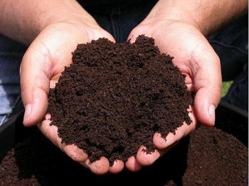 Phân trùn quế cũng là loại phân hữu cơ bón cho cây sau thu hoạch