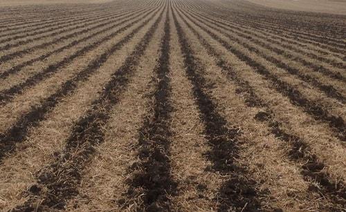 Trồng độc canh sẽ khiến đất trồng bị suy thoái