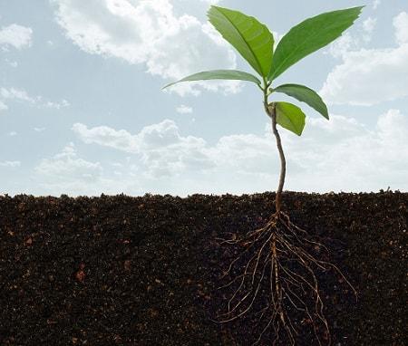Biện pháp để tăng cường hệ vi sinh vật đất như bón hữu cơ, bón vôi, luân canh...