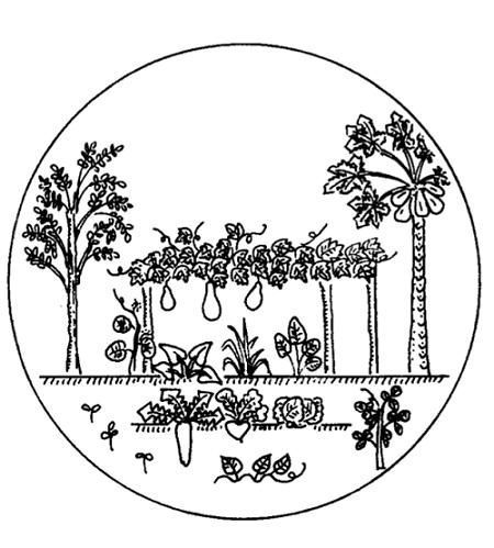 Cấu trúc nhiều tầng là một trong những nguyên tắc nông nghiệp sinh thái
