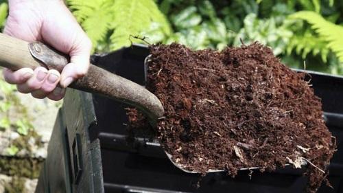 Ủ phân chuồng bằng nấm trichoderma giúp phân giải nhanh các mùn bã hữu cơ