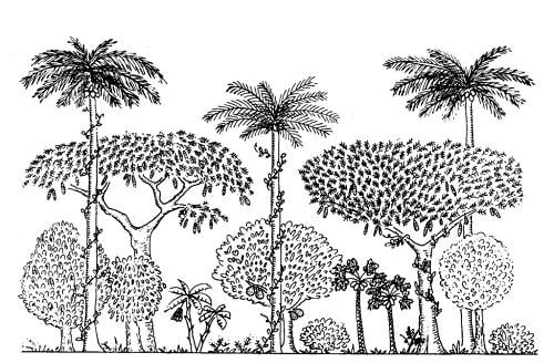 Cấu trúc nhiều tầng của rừng tự nhiên - Thiên nhiên và nông nghiệp