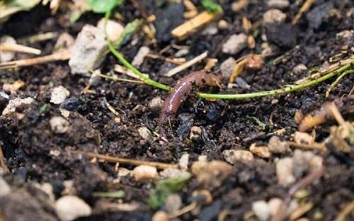 Chất hữu cơ và mùn được vi sinh vật phân hủy