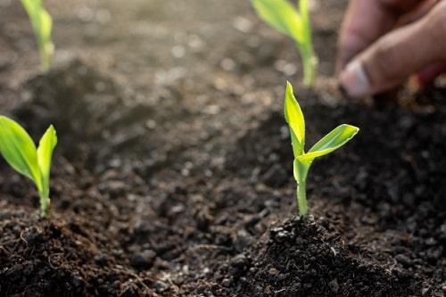 Chất hữu cơ và mùn cung cấp thức ăn cho cây trồng và vi sinh vật