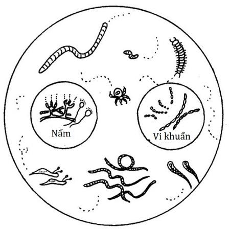 """Nông nghiệp sinh thái yêu cầu nền """"đất sống"""""""