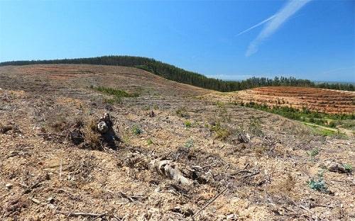 Đốt rừng làm nương rẫy là một trong những nguyên nhân khiến đất trồng bị thoái hóa