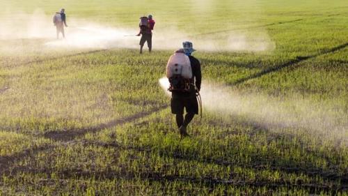 Nông nghiệp hóa học gây hại đến môi trường đất và làm giảm hệ vi sinh vật