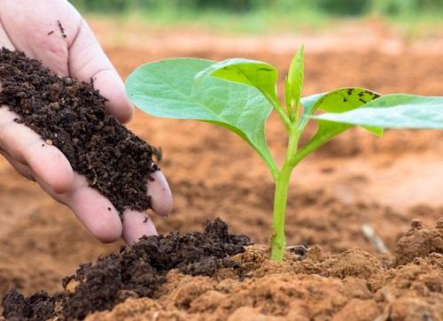 Bổ sung nhiều hữu cơ sẽ góp phần nuôi dưỡng và phát triển hệ vi sinh vật