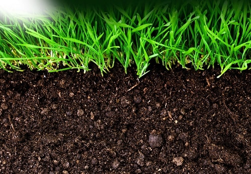 Khôi phục độ phì nhiêu của đất để cây trồng sống khỏe hơn