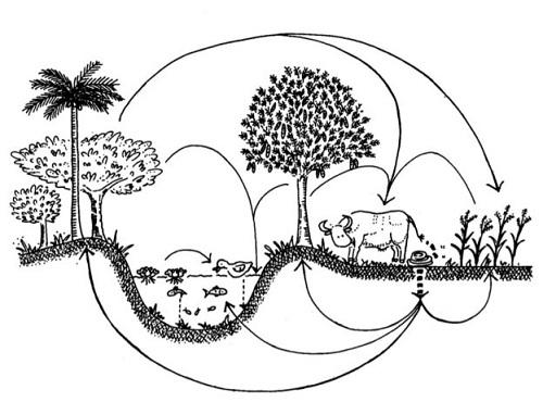 Nguyên tắc nông nghiệp sinh thái: tái chu chuyển bằng cách kết hợp nuôi cá trồng cây