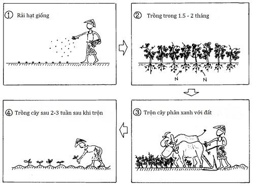 Bón phân và bảo tồn đất: Gieo trồng cây phân xanh