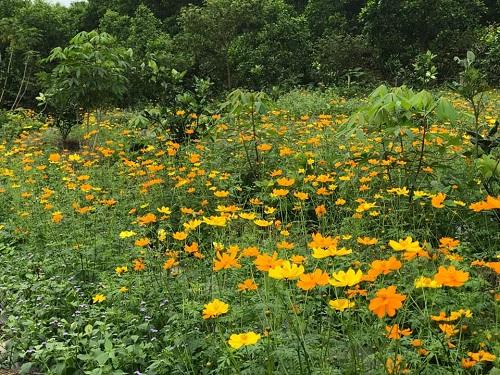 Hệ sinh thái nông nghiệp là hệ sinh thái do con người tạo ra và duy trì trên cơ sở các quy luật khách quan của hệ sinh thái