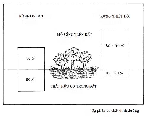 Sự phân bổ chất dinh dưỡng ở rừng - Thiên nhiên và nông nghiệp