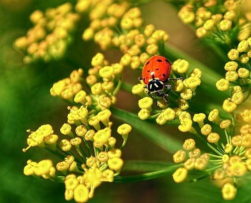Một môi trường canh tác tự nhiên là cân bằng giữa sâu bọ và thiên địch