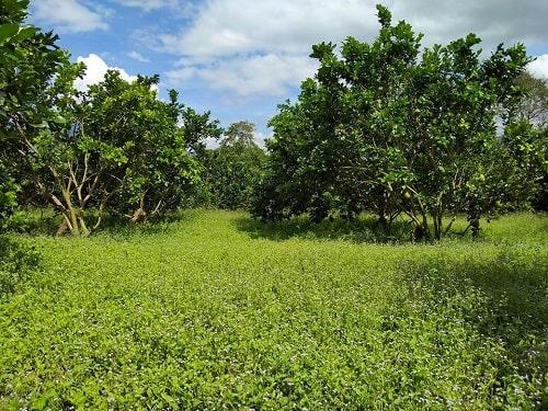 Môi trường đất được cải thiện nhờ canh tác tự nhiên góp phần thiết lập lại trật tự tự nhiên