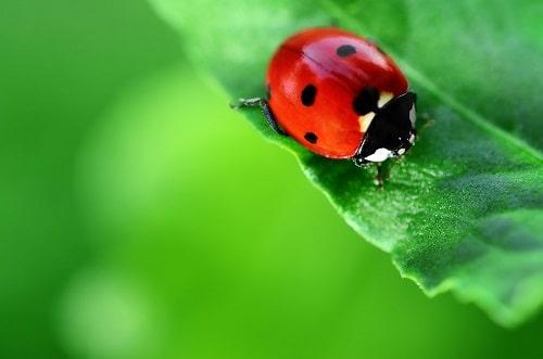 trật tự tự nhiên được thiết lập lại đảm bảo cho sự phát triển của các loài sinh vật