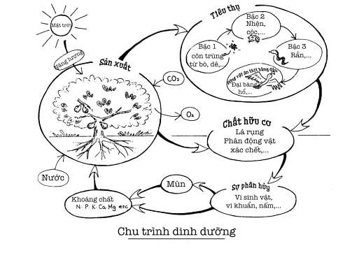 Vòng chu chuyển dinh dưỡng - Thiên nhiên và nông nghiệp
