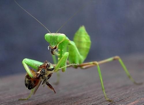 Côn trùng gây hại và thiên địch là thuật ngữ để chỉ các sinh vật có hại hay có lợi đối với cây trồng