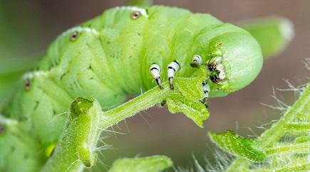 Thuốc trừ sâu hóa học có ảnh hưởng rất lớn đến côn trùng gây hại và thiên địch