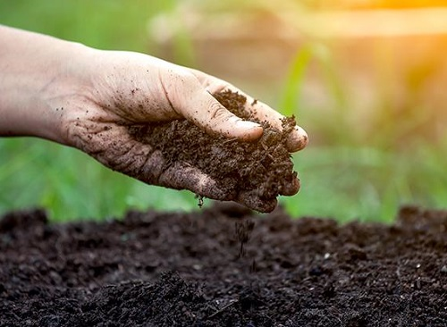 Làm nông hữu cơ: Cho đất ăn, không phải cho cây ăn