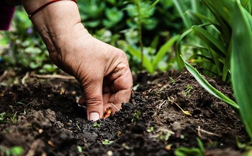 Làm nông hữu cơ: Đừng bao giờ nghĩ đất chỉ là bụi bẩn