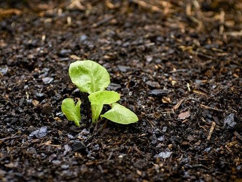 Làm nông hữu cơ: Hãy hiểu rõ sự sống trong đất