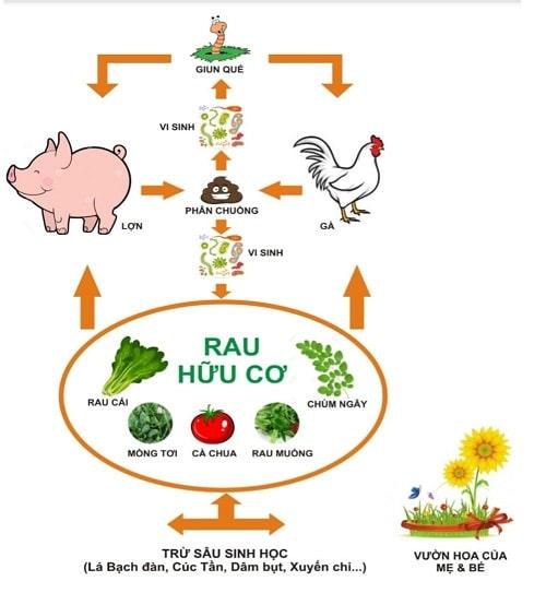mô hình nông nghiệp tuần hoàn, khép kín, kết hợp giữa chăn nuôi và trồng trọt.