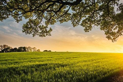 Nói một cách đơn giản, nông nghiệp bền vững là một chuỗi sản xuất lương thực, thực phẩm, cây trồng, vật nuôi...