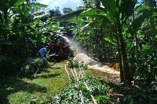 Cắt tải bạch đàn trong hệ thống Nông nghiệp rừng sinh thái