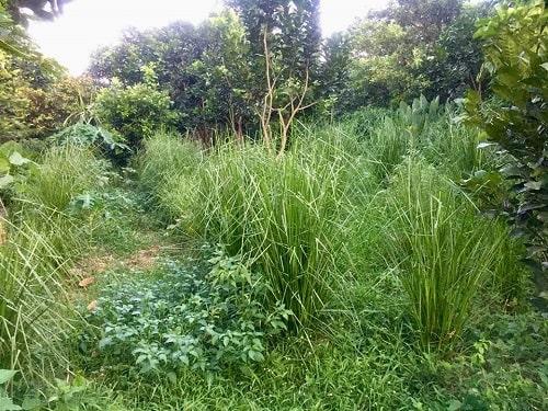 Nhiều rễ cỏ ăn sâu vào đất giúp đất biến thành miếng bọt biển, nước mưa thấm vào sâu hơn từ đó giữ nước bên trong lâu hơn