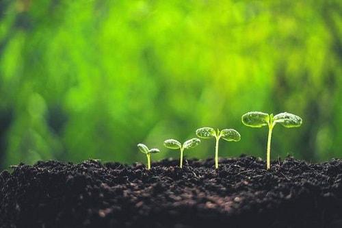 Antonio Vicente được gọi là kẻ kiên kẻ mơ mộng khi trồng một khu rừng