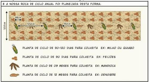 Cây trồng theo chu kỳ