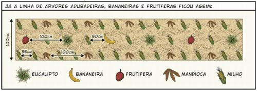 Cây trồng được sắp xếp theo hệ thống