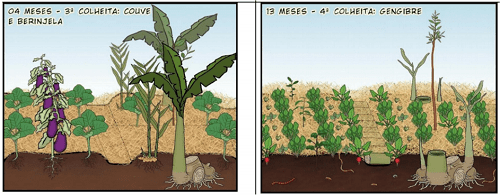 Vườn rau tiếp nối trong nông nghiệp sinh thái vườn rừng