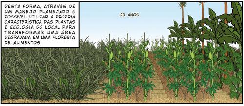 Phục hồi đất thoái hóa trong nông nghiệp sinh thái vườn rừng