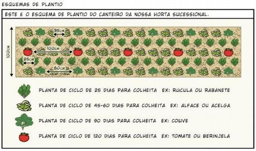 Mô hình vườn rau theo chu kỳ trong canh tác nông nghiệp sinh thái vườn rừng
